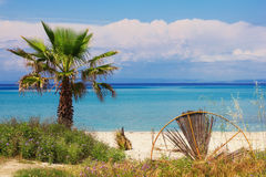 Palm tree on a beach in Hanioti, Greece Royalty Free Stock Images