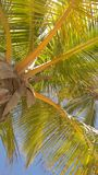Palm tree. On beach, hot sunny day Stock Images