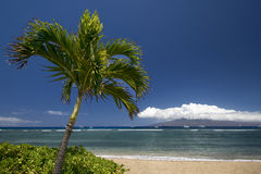 Palm tree and beach with the island of Lanai. Lahaina, Maui, Hawaii Royalty Free Stock Photo