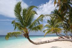 Palm tree on beach, Maldives. A palm tree on a sandy beach, with the turquoise-blue sea behind, on Filitheo Island, Maldives Royalty Free Stock Photos