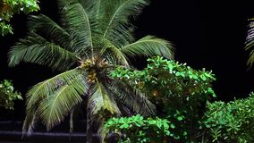 Palm tree on the beach at night. tourist place. Palm tree on the beach at night. tourist place stock footage