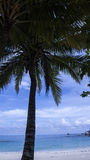 Palm tree on the beach, November 2014. Beautiful landscape behind the palm tree Royalty Free Stock Image