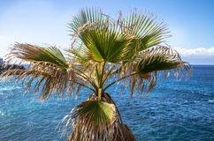 Palm tree on the beach. Palm tree with deep blue ocean on the Background, Spain Royalty Free Stock Images