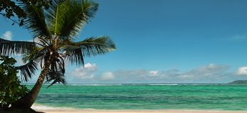 Palm tree , beach panorama. Royalty Free Stock Image
