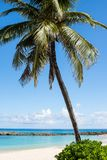 Palm Tree on a Beach in Paradise. A palm tree leaning over a white sandy beach in the Caribbean, with rocks lining the shore Royalty Free Stock Photography