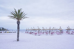 Palm tree on beach with pedalos and people. PUERTO ALCUDIA, MAJORCA, SPAIN - JULY 13, 2013: Palm tree on beach with pedalos and people on July 13, 2013 in Puerto royalty free stock photos