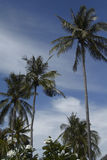 Palm tree on the beach, Phi-Phi Island Royalty Free Stock Images