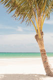 Palm tree on the beach. Royalty Free Stock Photo