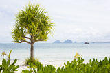 Palm tree on the beach Stock Photo