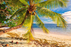 Palm tree on a beach at Praslin island, Seychelles Royalty Free Stock Photo