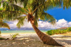 Palm tree on a beach on Praslin on the Seychelles. Palm tree on beautiful tropical beach at Praslin on the Seychelles Royalty Free Stock Photos