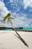 Palm tree and beach resort. On the island, Maldives Stock Image
