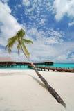 Palm tree and beach resort Stock Image