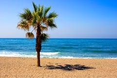 Palm tree. Stock Photos
