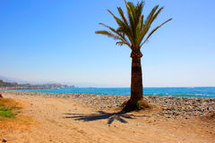 Palm tree. Royalty Free Stock Images