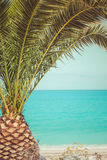 Palm tree on the beach. By the sea. Retro color style, close up Stock Photography