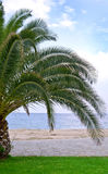Palm tree by the beach Royalty Free Stock Photo