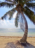 Palm tree on the beach Royalty Free Stock Photography
