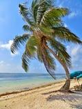 Palm tree on the beach Stock Photos