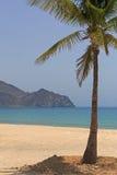 Palm tree on beach Stock Photos