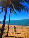 Palm tree beach sky blue ocean water walk. From a walk down Trinity beach in Australia Stock Photo