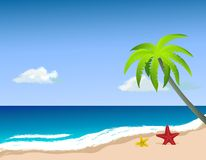 Palm tree on the beach, starfish on the sand. Royalty Free Stock Images