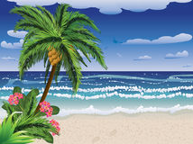 Palm tree on beach Stock Photo
