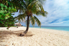 Palm tree on a beach Royalty Free Stock Photography