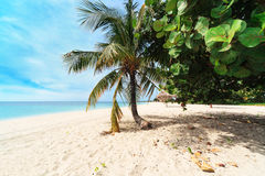 A palm tree on beach Royalty Free Stock Photography