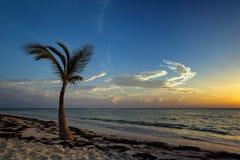 Palm tree on beach at sunrise Royalty Free Stock Photos