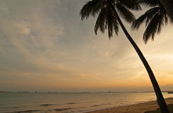 Palm tree on a beach at sunset.Horizontal view. Stock Photography