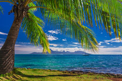 Palm tree on the beach on Tahiti with the view of Moorea Island Royalty Free Stock Image