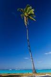Palm tree on beach Stock Image