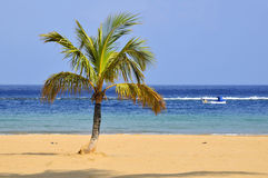 Palm tree on beach at tenerife Royalty Free Stock Photography