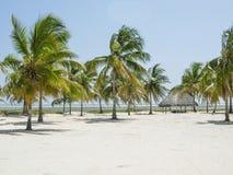 Palm tree beach. A palm trees in a beach in Watamu Kenya Royalty Free Stock Photos