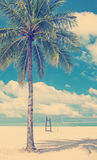Palm Tree Beach Royalty Free Stock Photos
