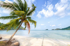 Palm tree  and beach on tropical island. Stock Images