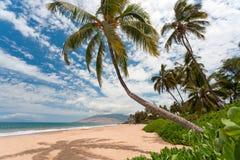 Palm tree beach. Tropical  beach ocean and sea in maui hawaII Stock Photos