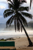 Palm tree and beach in tropics. Palm tree silhouetted on beach with crashing waves Stock Photos