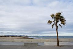 Palm tree in the beach of Valencia, Spain. Panorama of cloudy beach with waves of the sea. Empty spring beach of Royalty Free Stock Images