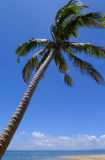 Palm tree on a beach, Vanua Levu island, Fiji Stock Photography