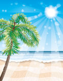 Palm tree on the beach. Royalty Free Stock Images