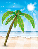 Palm tree on the beach. Stock Photos