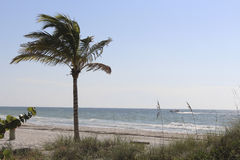 Palm Tree Beach View Royalty Free Stock Photography
