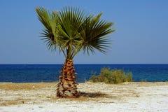 Palm tree on beach, Zakynthos island Royalty Free Stock Image