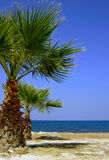 Palm tree on beach, Zakynthos island Royalty Free Stock Photo