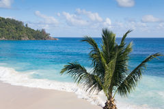 Palm tree on a beautiful beach Stock Photo