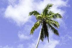 Palm tree on a beautiful day Royalty Free Stock Photo