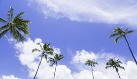 Palm tree on a beautiful day Royalty Free Stock Images
