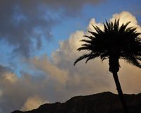 A palm tree over Diamond Head. A beautiful Hawaiian palm and the full moon  over Diamond Head in Honolulu Hawaii Stock Photos